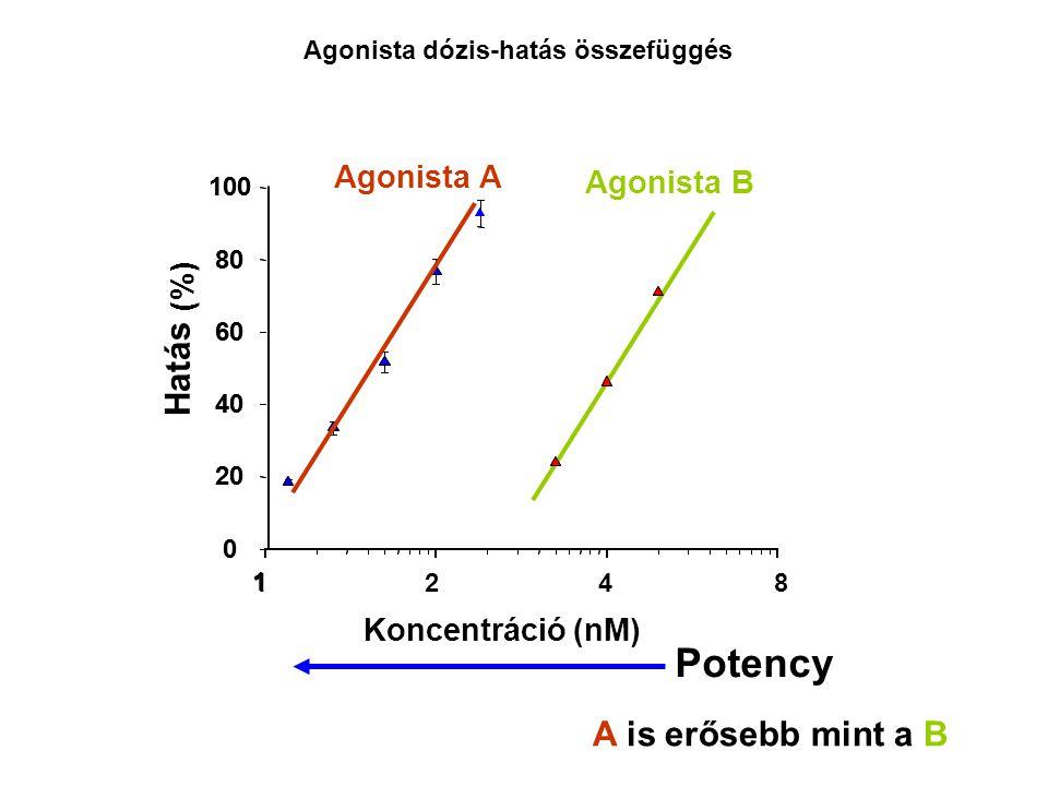 1 0 20 40 60 80 100 Koncentráció (%) Agonista B 1 0 20 40 60 80 100 (nM) Hatás Agonista A 428 Potency A is erősebb mint a B Agonista dózis-hatás össze
