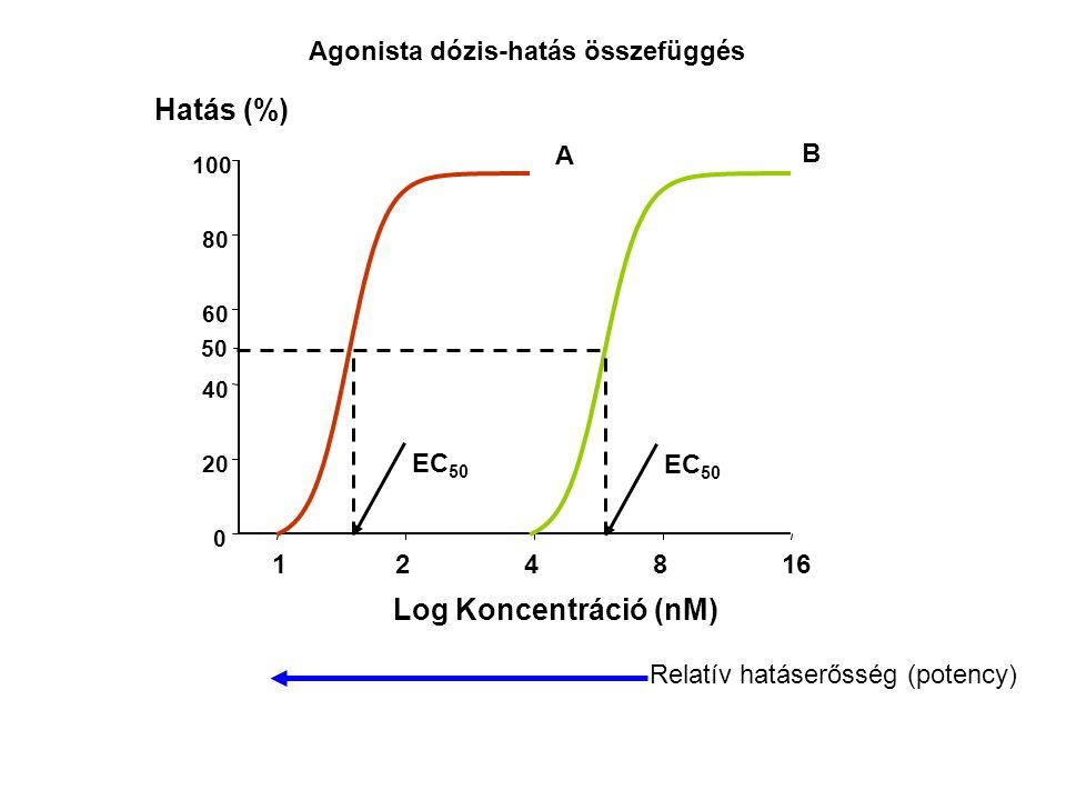 Log Koncentráció (nM) 124816 0 20 40 60 80 100 Hatás (%) Relatív hatáserősség (potency) Agonista dózis-hatás összefüggés 50 A B EC 50