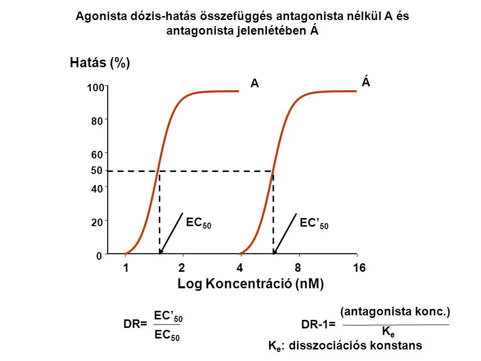 Log Koncentráció (nM) 124816 0 20 40 60 80 100 Hatás (%) Agonista dózis-hatás összefüggés antagonista nélkül A és antagonista jelenlétében Á 50 A Á EC
