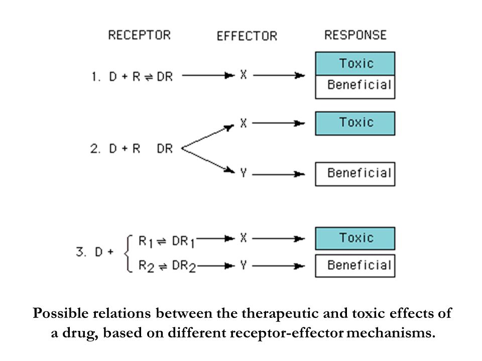 Possible relations between the therapeutic and toxic effects of a drug, based on different receptor-effector mechanisms.