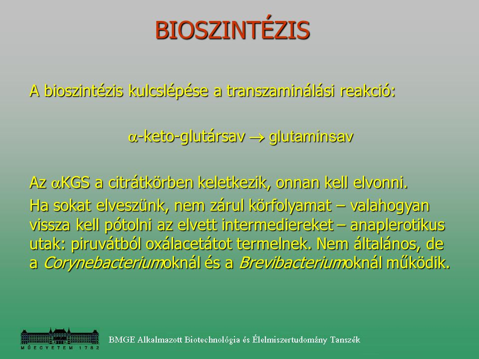 BIOSZINTÉZIS A bioszintézis kulcslépése a transzaminálási reakció:  -keto-glutársav  glutaminsav Az  KGS a citrátkörben keletkezik, onnan kell elvo