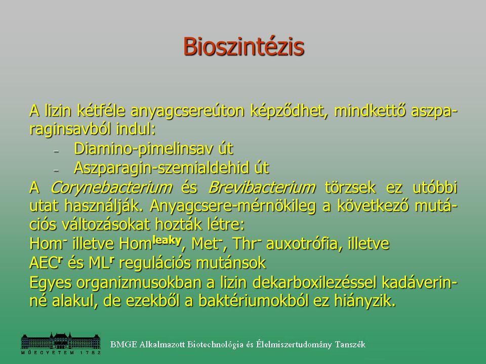 A lizin kétféle anyagcsereúton képződhet, mindkettő aszpa- raginsavból indul: – Diamino-pimelinsav út – Aszparagin-szemialdehid út A Corynebacterium é