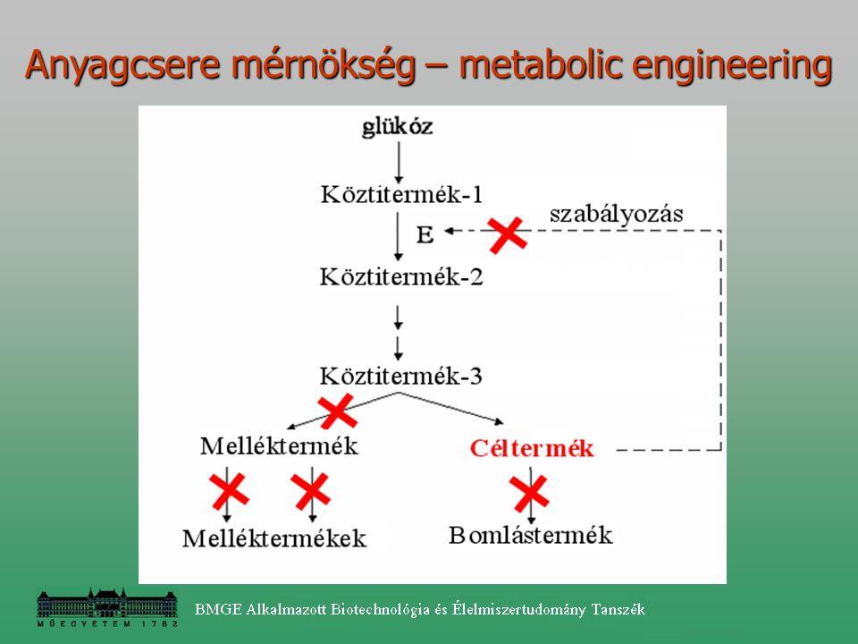 Anyagcsere mérnökség – metabolic engineering
