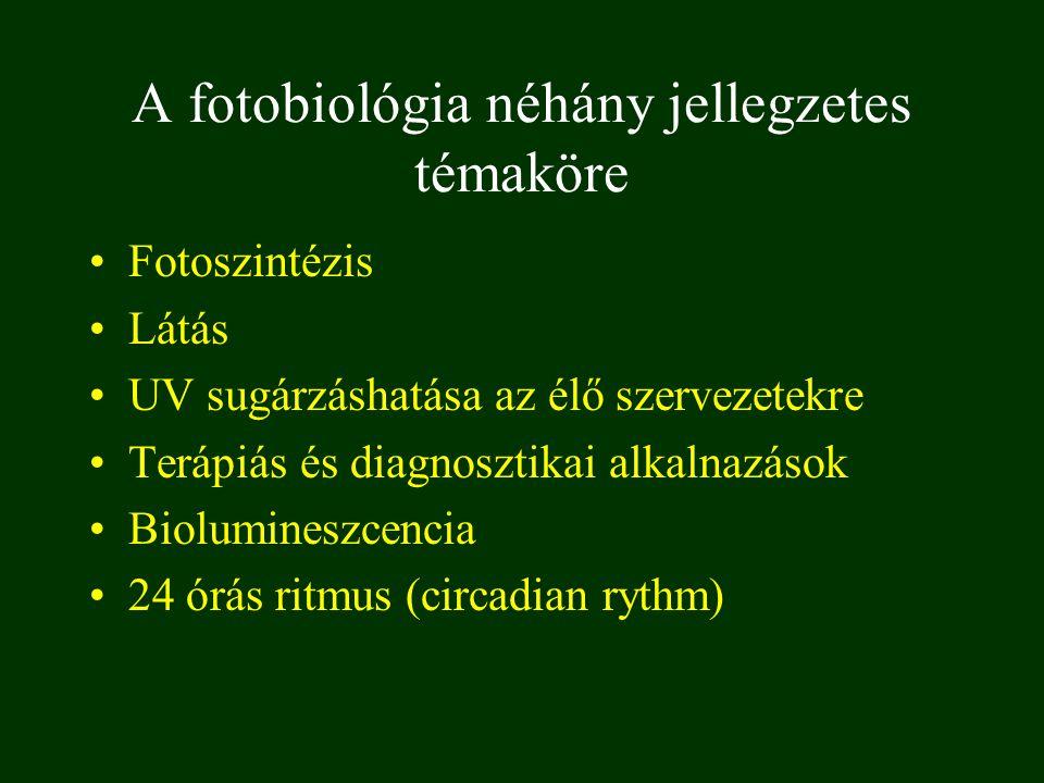 A fotobiológia néhány jellegzetes témaköre Fotoszintézis Látás UV sugárzáshatása az élő szervezetekre Terápiás és diagnosztikai alkalnazások Biolumine