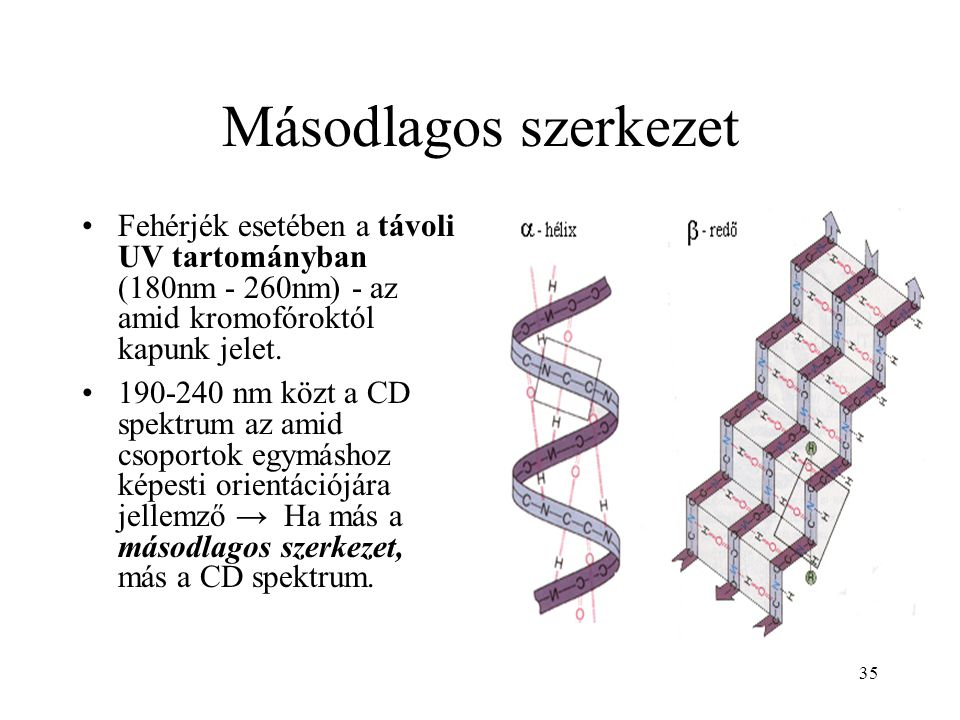 35 Másodlagos szerkezet Fehérjék esetében a távoli UV tartományban (180nm - 260nm) - az amid kromofóroktól kapunk jelet. 190-240 nm közt a CD spektrum
