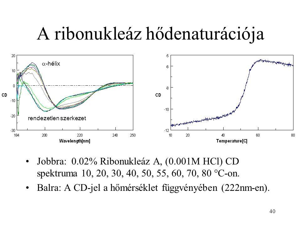 40 A ribonukleáz hődenaturációja Jobbra: 0.02% Ribonukleáz A, (0.001M HCl) CD spektruma 10, 20, 30, 40, 50, 55, 60, 70, 80 °C-on. Balra: A CD-jel a hő
