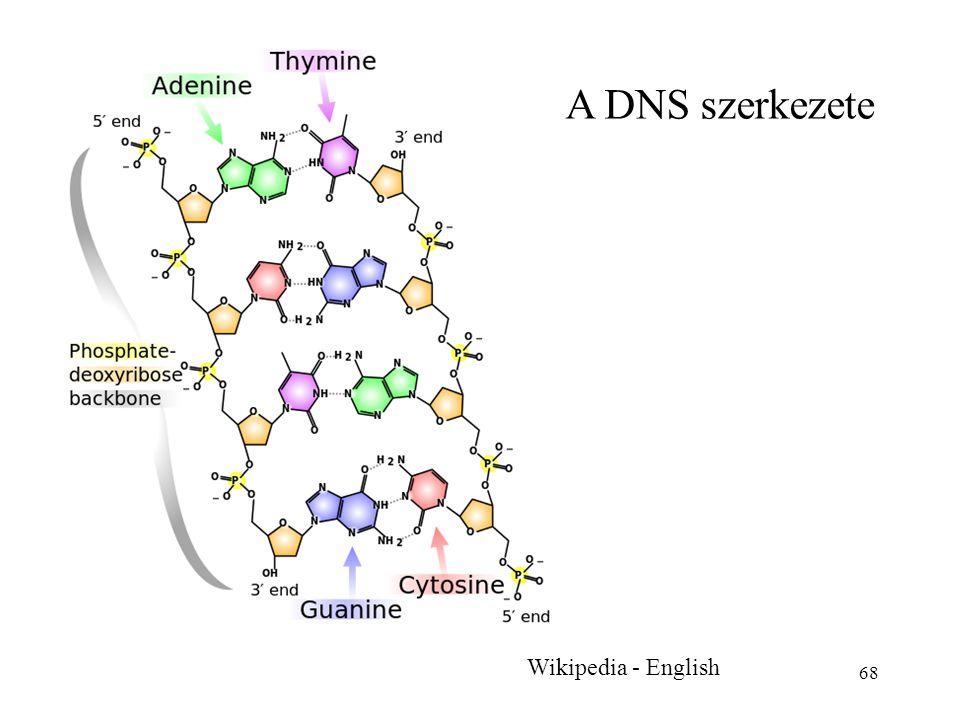 68 Wikipedia - English A DNS szerkezete
