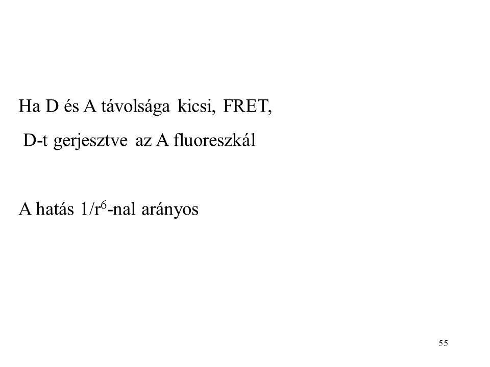 55 Ha D és A távolsága kicsi, FRET, D-t gerjesztve az A fluoreszkál A hatás 1/r 6 -nal arányos