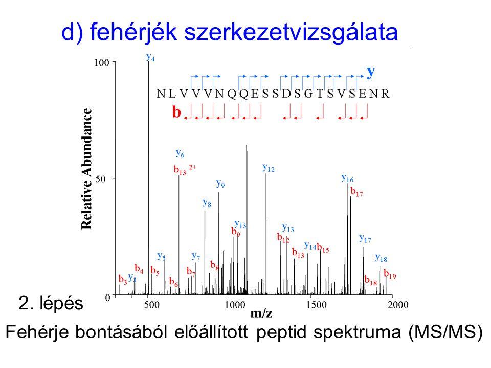 d) fehérjék szerkezetvizsgálata Fehérje bontásából előállított peptid spektruma (MS/MS) 2. lépés