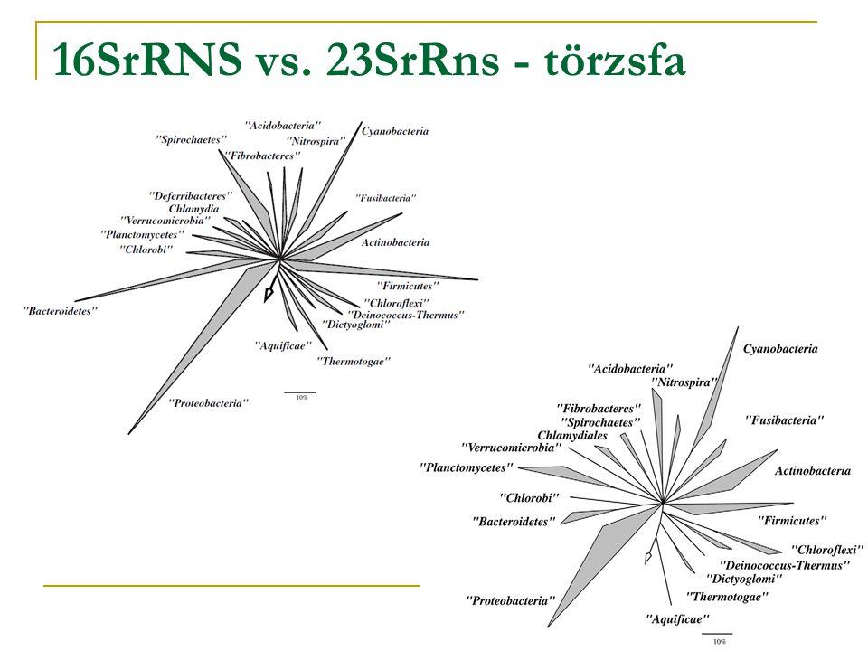 16SrRNS vs. 23SrRns - törzsfa