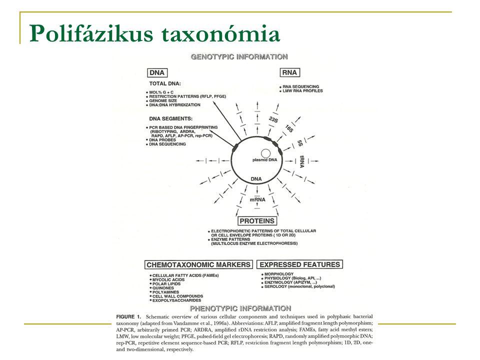 B12.4 Deltaproteobacteria Fontosabb rendek: Desulfovibrionales Bdellovibrionales