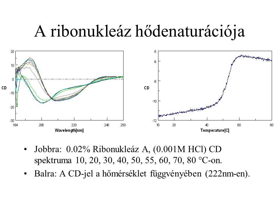 A ribonukleáz hődenaturációja Jobbra: 0.02% Ribonukleáz A, (0.001M HCl) CD spektruma 10, 20, 30, 40, 50, 55, 60, 70, 80 °C-on. Balra: A CD-jel a hőmér
