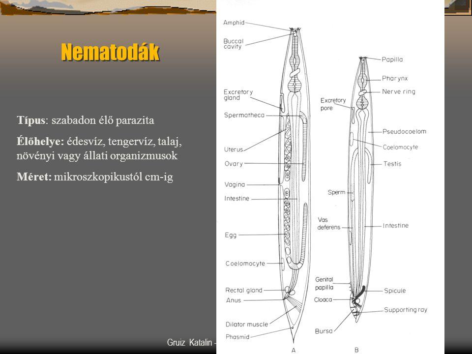 Gruiz Katalin –- Könyvbemutató –- 200219 Nematodák Típus: szabadon élő parazita Élőhelye: édesvíz, tengervíz, talaj, növényi vagy állati organizmusok