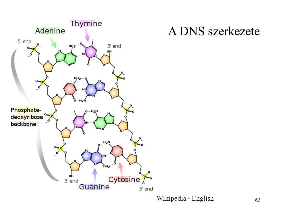 63 Wikipedia - English A DNS szerkezete