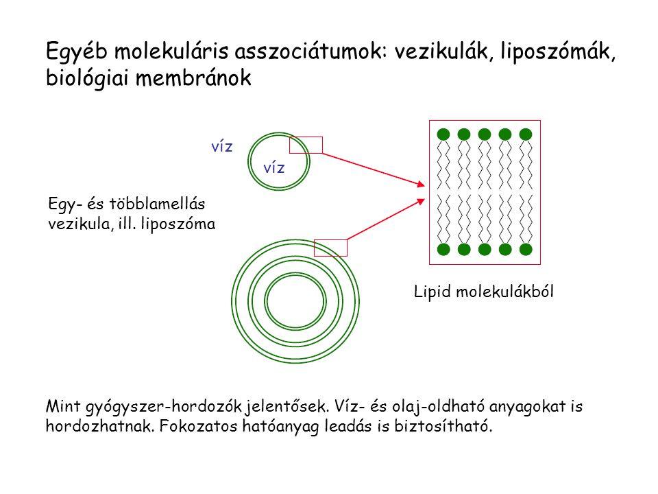 Egyéb molekuláris asszociátumok: vezikulák, liposzómák, biológiai membránok Egy- és többlamellás vezikula, ill.
