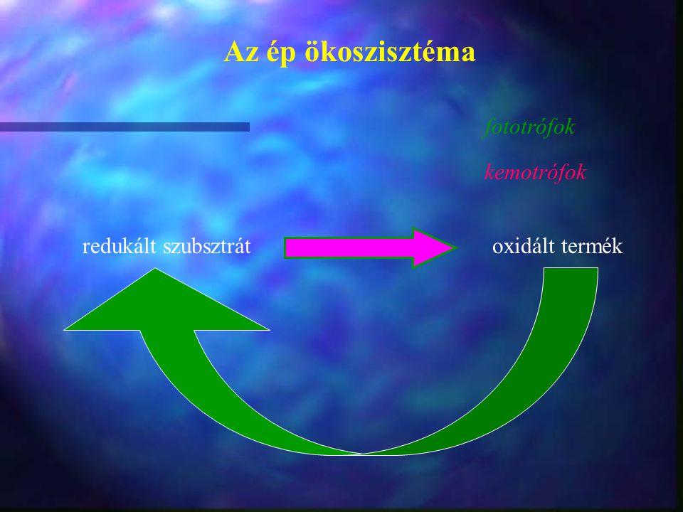 Az ép ökoszisztéma redukált szubsztrát oxidált termék fototrófok kemotrófok