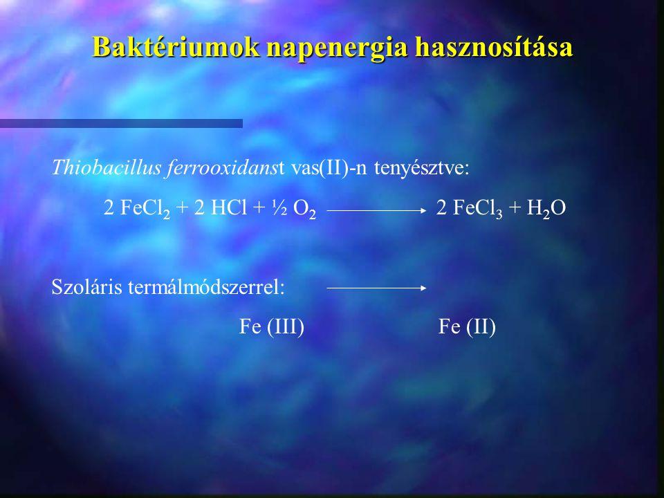 Baktériumok napenergia hasznosítása Thiobacillus ferrooxidanst vas(II)-n tenyésztve: 2 FeCl 2 + 2 HCl + ½ O 2 2 FeCl 3 + H 2 O Szoláris termálmódszerr