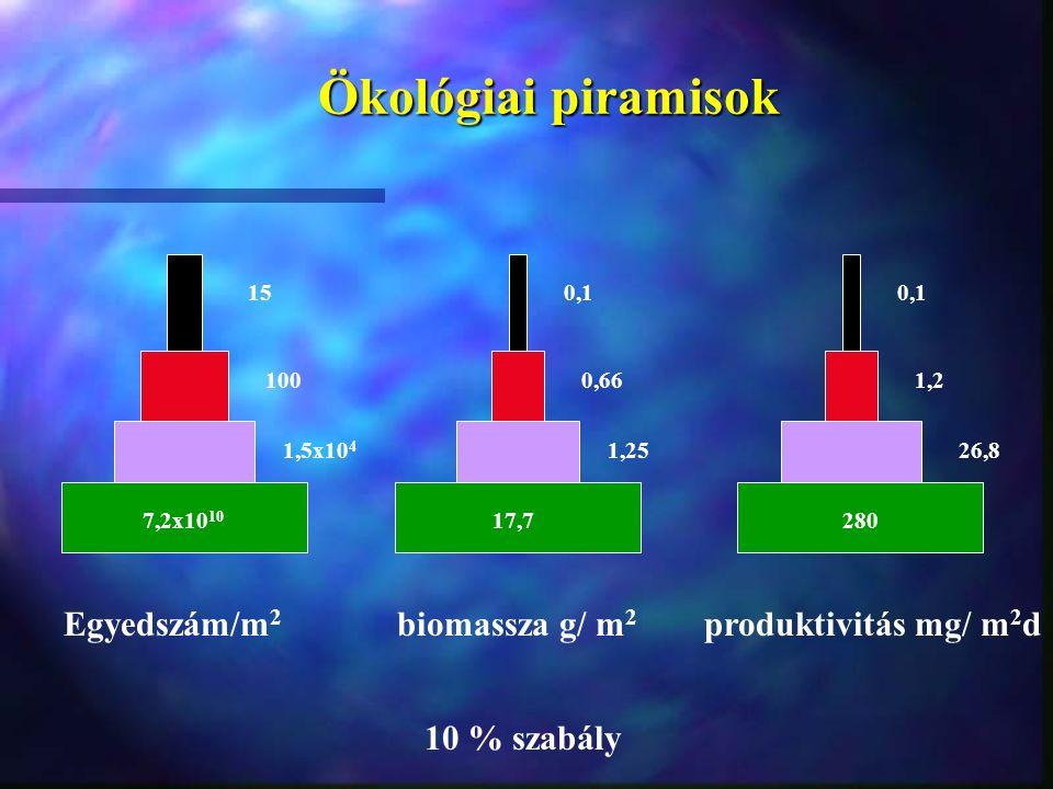 Ökológiai piramisok Egyedszám/m 2 biomassza g/ m 2 produktivitás mg/ m 2 d 15 0,66100 0,1 28017,7 26,81,251,5x10 4 1,2 7,2x10 10 10 % szabály