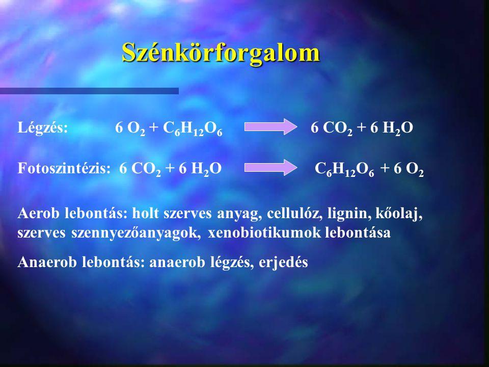 Szénkörforgalom Légzés: 6 O 2 + C 6 H 12 O 6 6 CO 2 + 6 H 2 O Fotoszintézis: 6 CO 2 + 6 H 2 O C 6 H 12 O 6 + 6 O 2 Aerob lebontás: holt szerves anyag,
