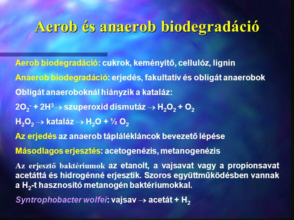 Aerob és anaerob biodegradáció Aerob biodegradáció: cukrok, keményítő, cellulóz, lignin Anaerob biodegradáció: erjedés, fakultatív és obligát anaerobo