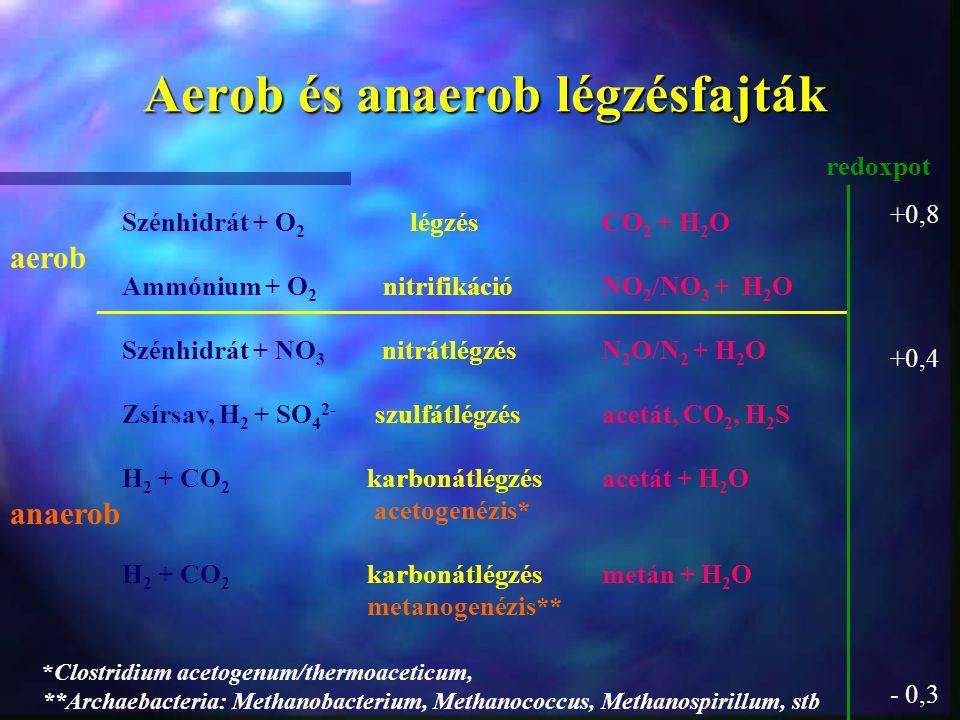 Aerob és anaerob légzésfajták aerob anaerob redoxpot +0,8 +0,4 - 0,3 Szénhidrát + O 2 légzésCO 2 + H 2 O Ammónium + O 2 nitrifikációNO 2 /NO 3 + H 2 O