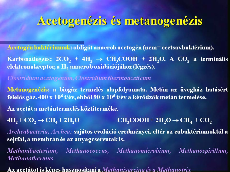 Acetogenézis és metanogenézis Acetogén baktériumok: obligát anaerob acetogén (nem= ecetsavbaktérium). Karbonátlégzés: 2CO 2 + 4H 2  CH 3 COOH + 2H 2