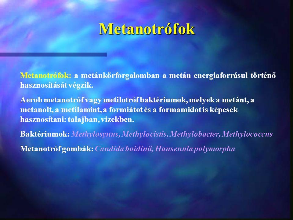 Metanotrófok Metanotrófok: a metánkörforgalomban a metán energiaforrásul történő hasznosítását végzik. Aerob metanotróf vagy metilotróf baktériumok, m