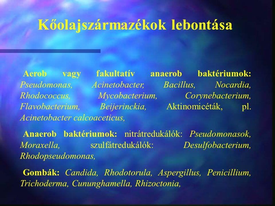 Kőolajszármazékok lebontása Aerob vagy fakultatív anaerob baktériumok: Pseudomonas, Acinetobacter, Bacillus, Nocardia, Rhodococcus, Mycobacterium, Cor