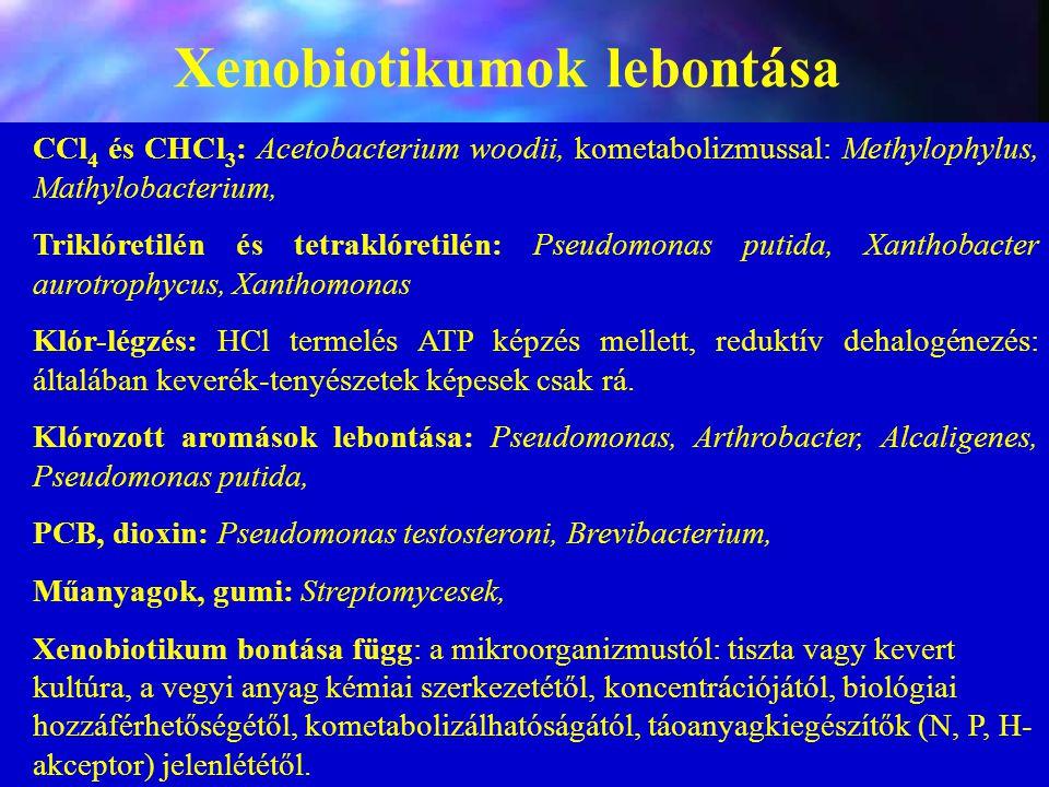 Xenobiotikumok lebontása CCl 4 és CHCl 3 : Acetobacterium woodii, kometabolizmussal: Methylophylus, Mathylobacterium, Triklóretilén és tetraklóretilén