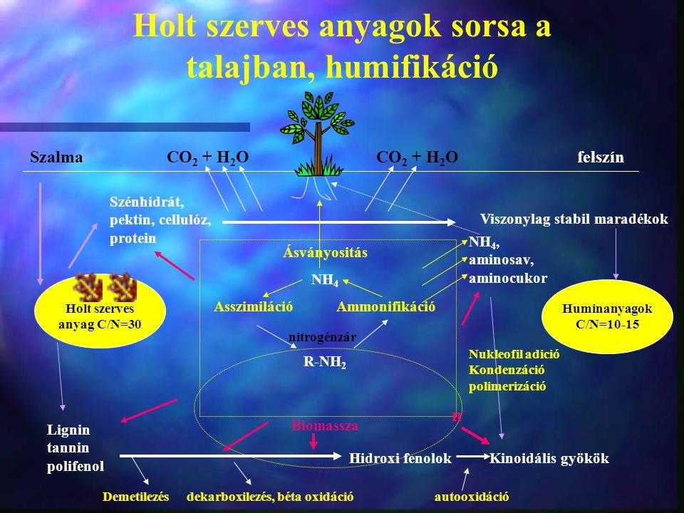 Holt szerves anyagok sorsa a talajban, humifikáció Holt szerves anyag C/N=30 Huminanyagok C/N=10-15 SzalmaCO 2 + H 2 O CO 2 + H 2 O felszín Szénhidrát