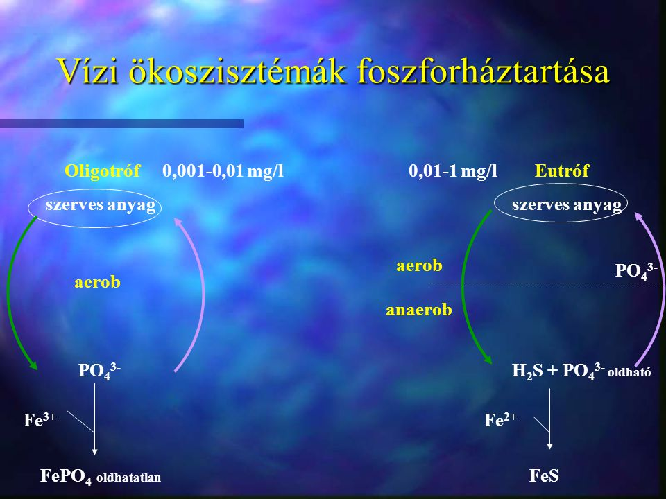 Vízi ökoszisztémák foszforháztartása Oligotróf Eutrófszerves anyag PO 4 3- PO 4 3- H 2 S + PO 4 3- oldható FePO 4 oldhatatlan FeS Fe 3+ Fe 2+ aerob an