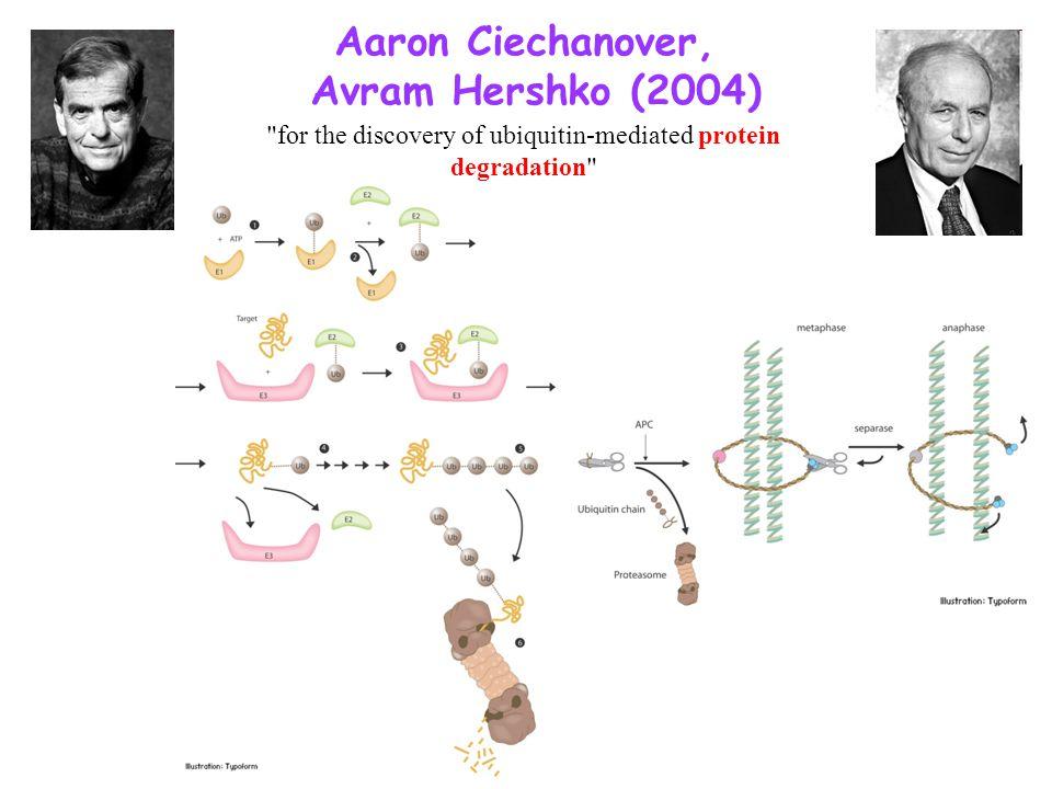 Aaron Ciechanover, Avram Hershko (2004)