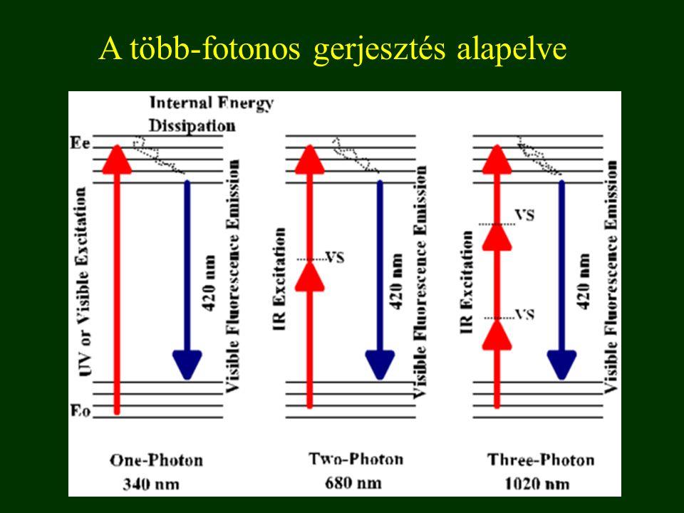 A több-fotonos gerjesztés alapelve