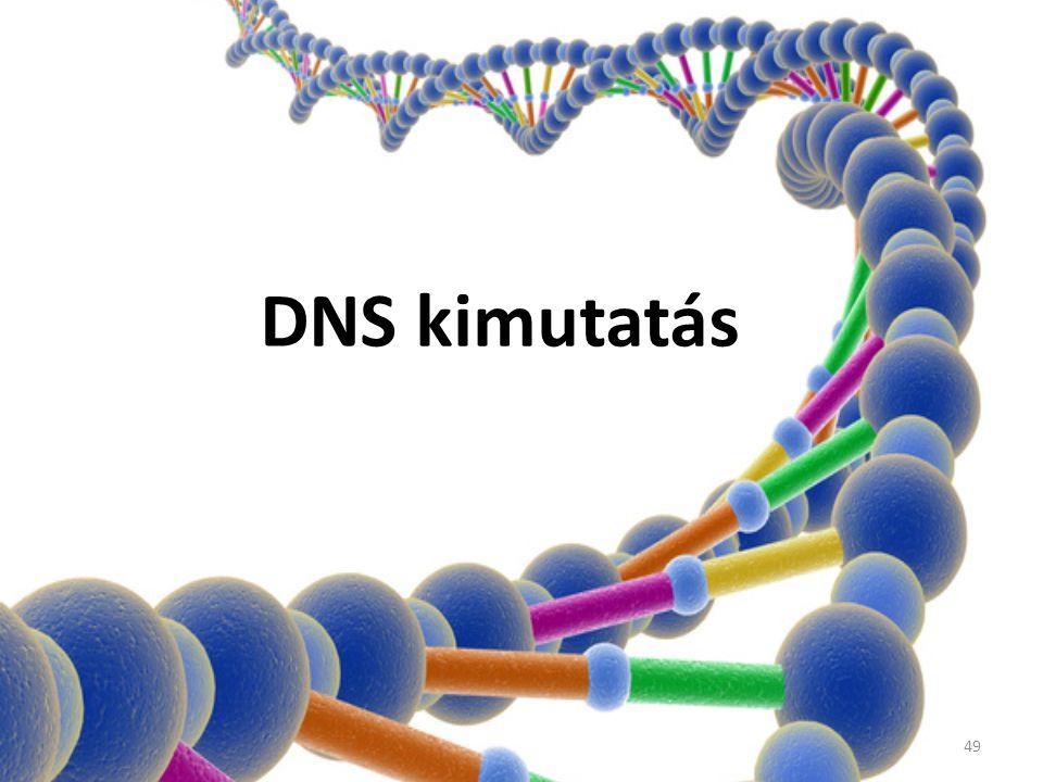 DNS kimutatás 49