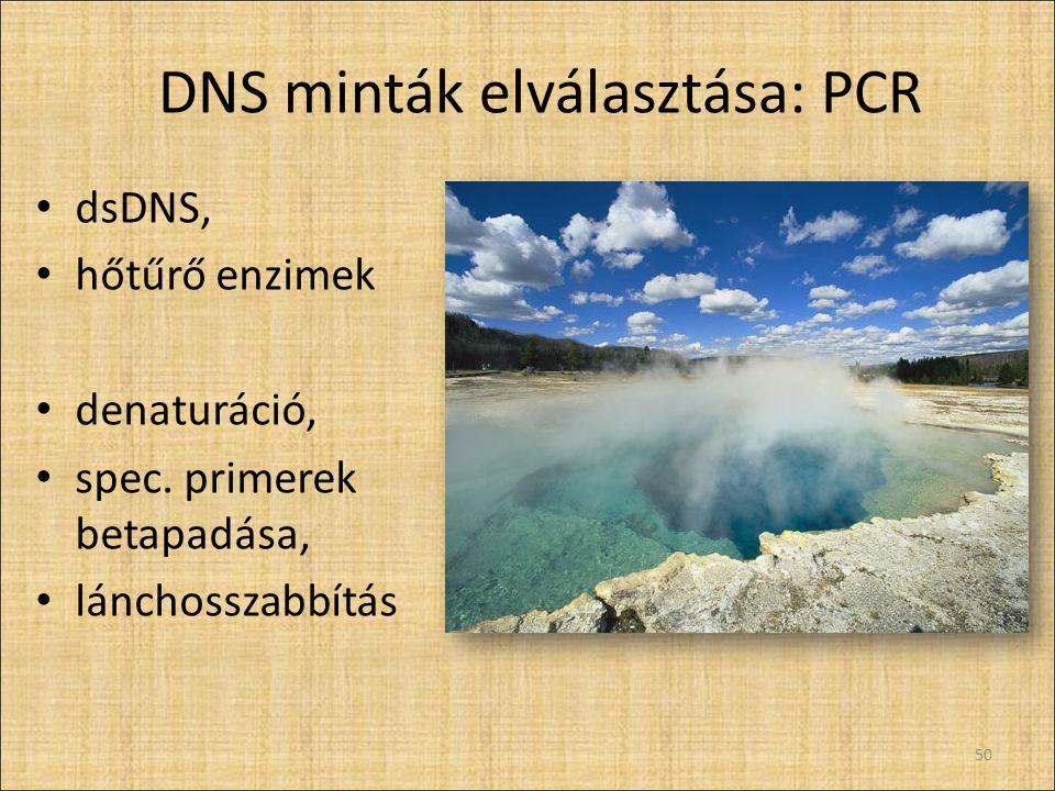 DNS minták elválasztása: PCR dsDNS, hőtűrő enzimek denaturáció, spec. primerek betapadása, lánchosszabbítás 50