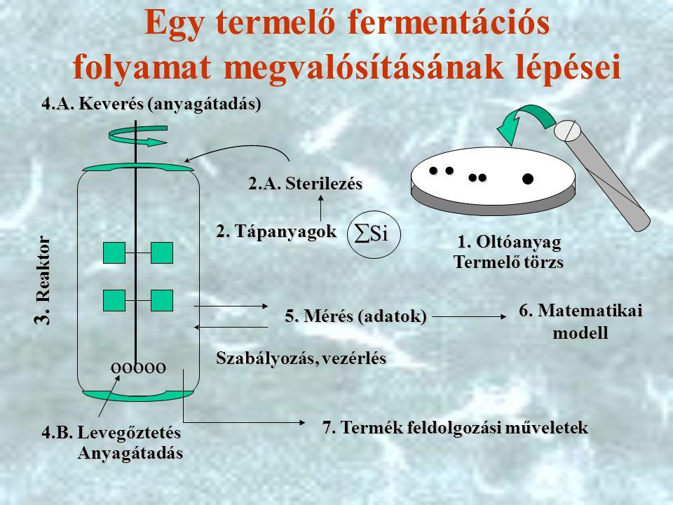 Egy termelő fermentációs folyamat megvalósításának lépései ooooo ooooo     1.