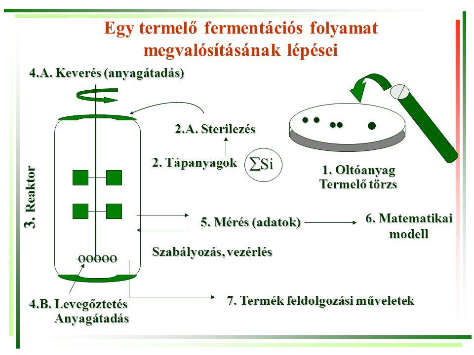 Egy termelő fermentációs folyamat megvalósításának lépései ooooo ooooo     1. Oltóanyag Termelő törzs 4.B. Levegőztetés Anyagátadás 3. Reaktor 2