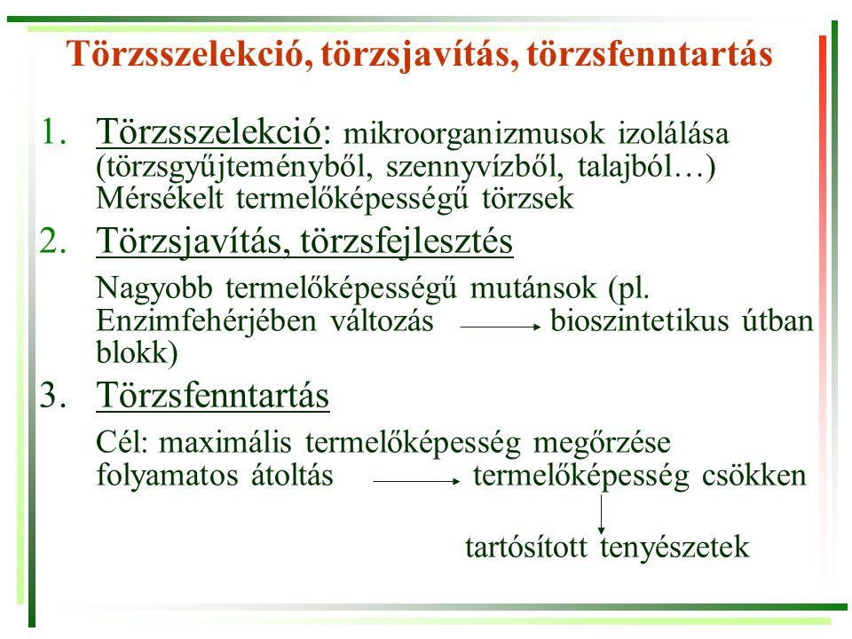 Törzsszelekció, törzsjavítás, törzsfenntartás 1.Törzsszelekció: mikroorganizmusok izolálása (törzsgyűjteményből, szennyvízből, talajból…) Mérsékelt te