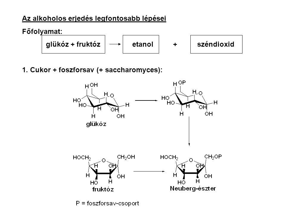 Az alkoholos erjedés legfontosabb lépései Főfolyamat: glükóz + fruktóz etanol + széndioxid 1. Cukor + foszforsav (+ saccharomyces):