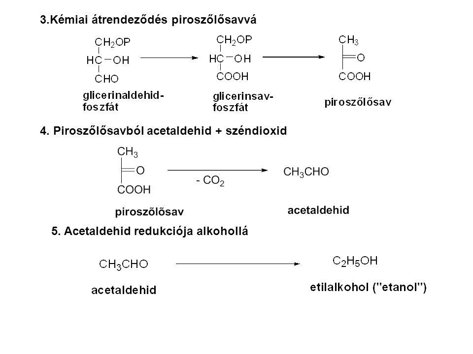3.Kémiai átrendeződés piroszőlősavvá 4. Piroszőlősavból acetaldehid + széndioxid 5. Acetaldehid redukciója alkohollá