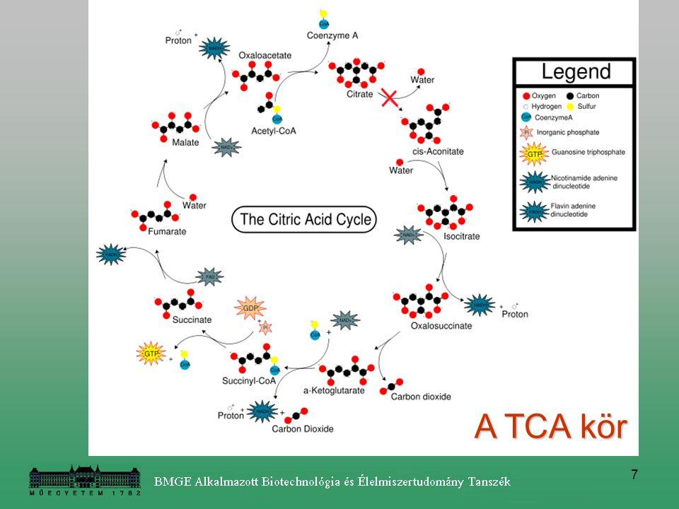 8 citoszólmitochondium Citromsav bioszintézis