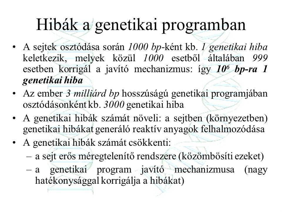 Hibák a genetikai programban A sejtek osztódása során 1000 bp-ként kb. 1 genetikai hiba keletkezik, melyek közül 1000 esetből általában 999 esetben ko