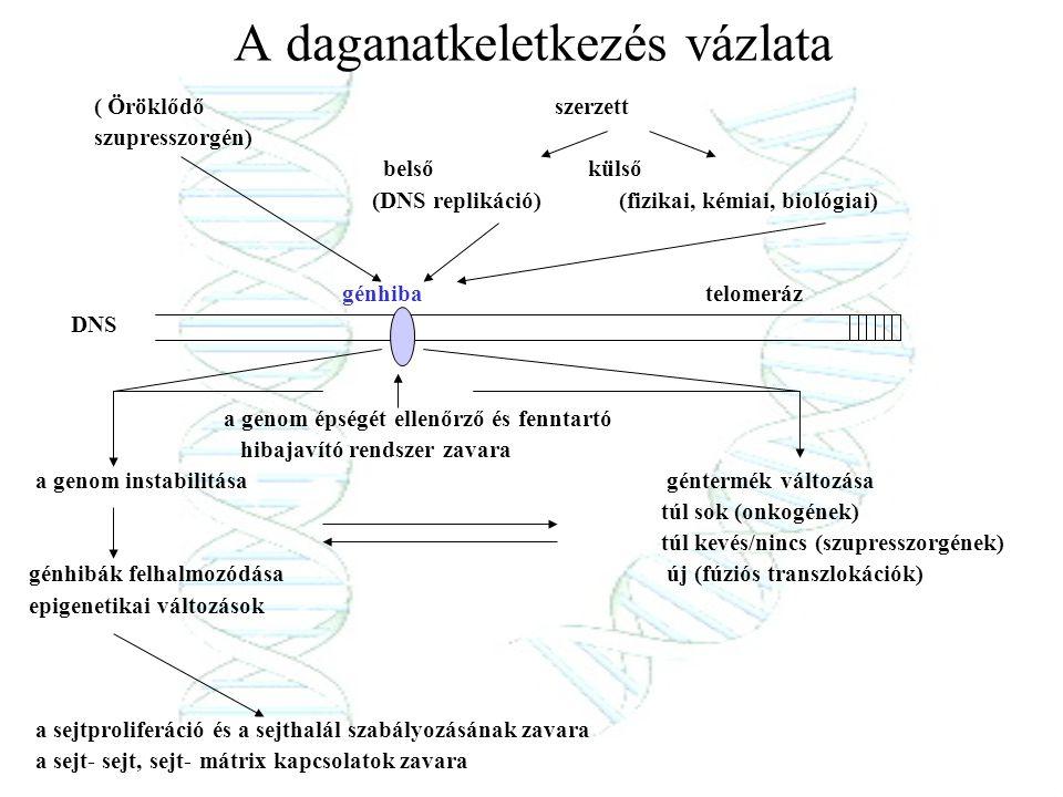 A daganatkeletkezés vázlata ( Öröklődő szerzett szupresszorgén) belső külső (DNS replikáció) (fizikai, kémiai, biológiai) génhiba telomeráz DNS a geno