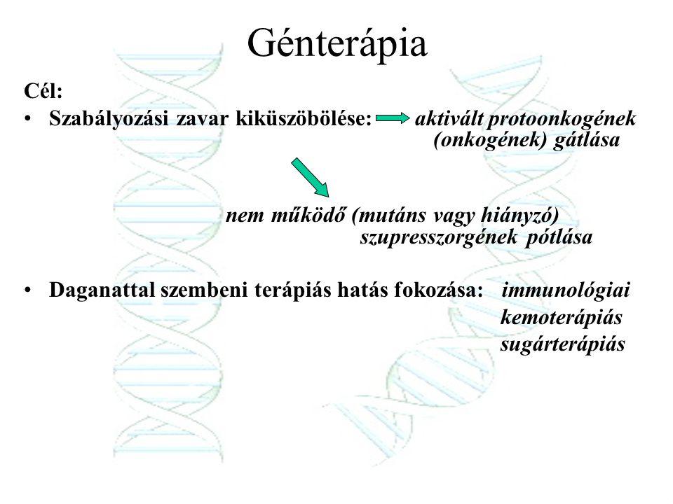 Génterápia Cél: Szabályozási zavar kiküszöbölése: aktivált protoonkogének (onkogének) gátlása nem működő (mutáns vagy hiányzó) szupresszorgének pótlás