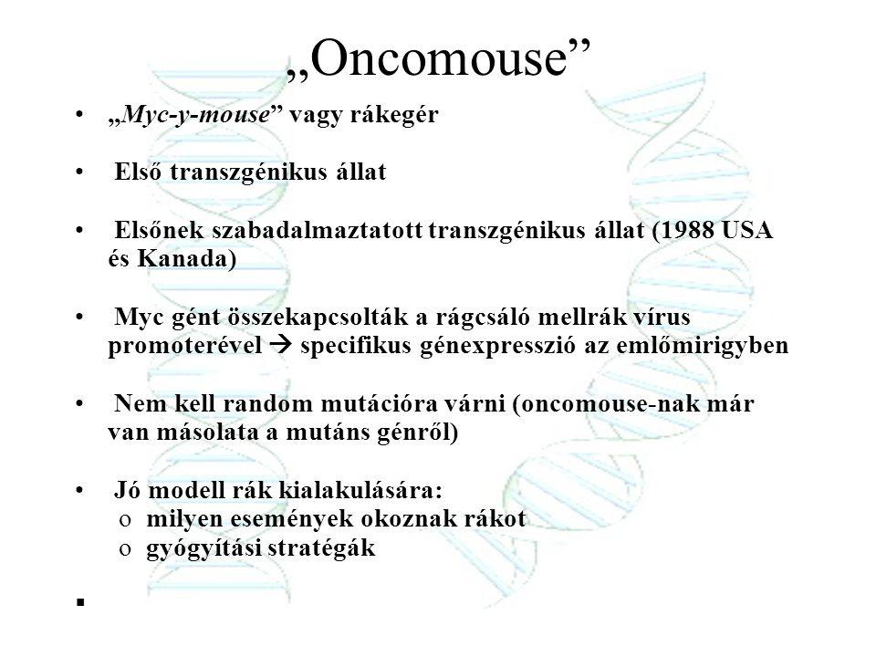 """""""Myc-y-mouse"""" vagy rákegér Első transzgénikus állat Elsőnek szabadalmaztatott transzgénikus állat (1988 USA és Kanada) Myc gént összekapcsolták a rágc"""