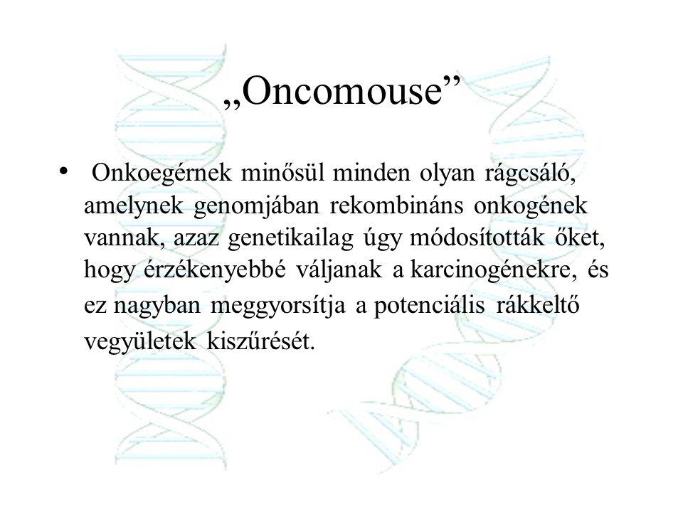 """""""Oncomouse"""" Onkoegérnek minősül minden olyan rágcsáló, amelynek genomjában rekombináns onkogének vannak, azaz genetikailag úgy módosították őket, hogy"""