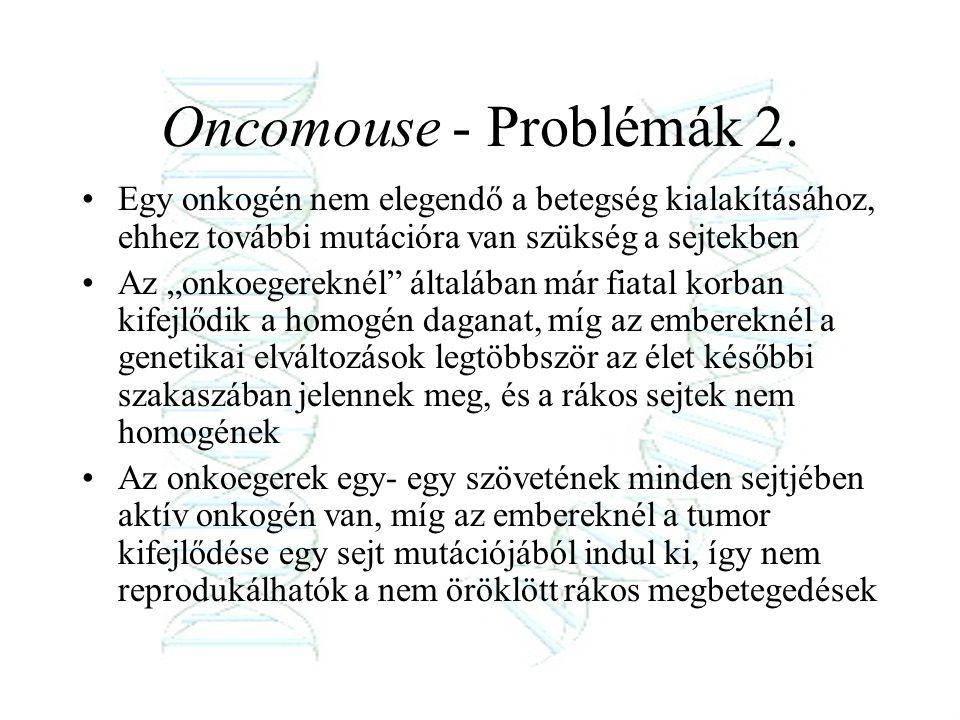 """Oncomouse - Problémák 2. Egy onkogén nem elegendő a betegség kialakításához, ehhez további mutációra van szükség a sejtekben Az """"onkoegereknél"""" általá"""