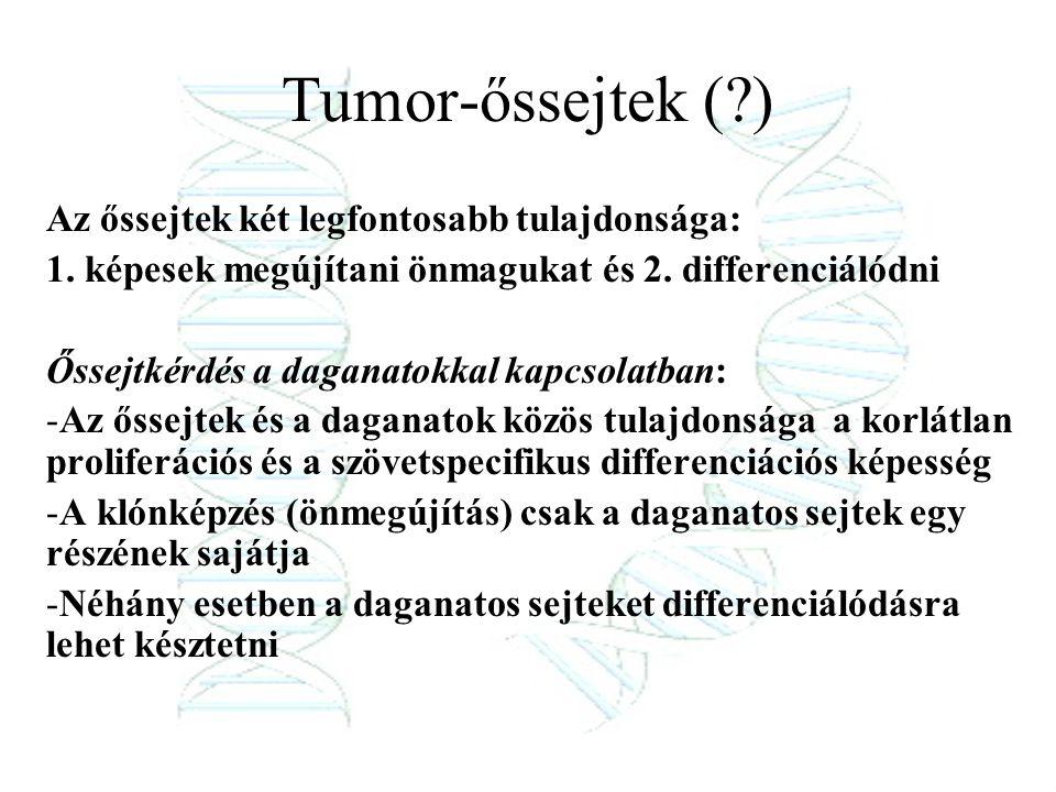 Tumor-őssejtek (?) Az őssejtek két legfontosabb tulajdonsága: 1. képesek megújítani önmagukat és 2. differenciálódni Őssejtkérdés a daganatokkal kapcs