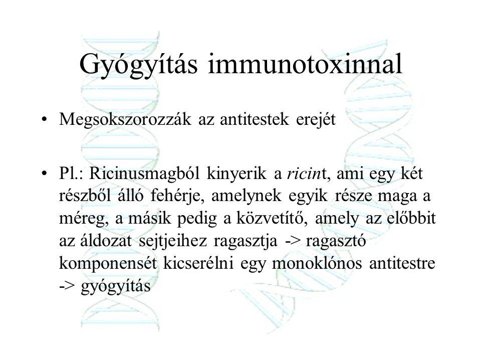 Gyógyítás immunotoxinnal Megsokszorozzák az antitestek erejét Pl.: Ricinusmagból kinyerik a ricint, ami egy két részből álló fehérje, amelynek egyik r