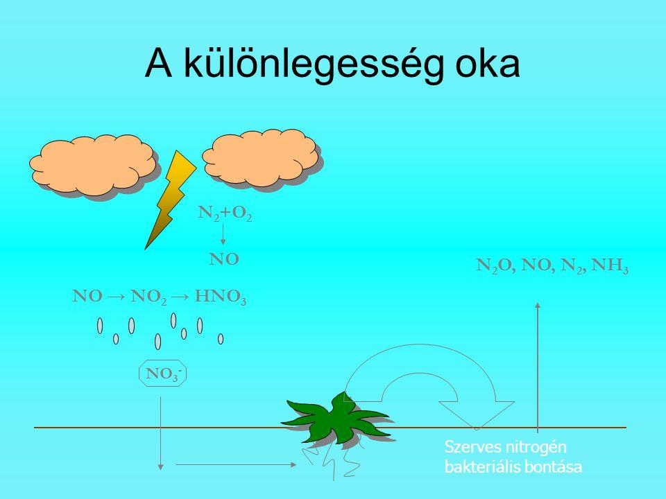 A különlegesség oka N 2 +O 2 NO NO → NO 2 → HNO 3 NO 3 - Szerves nitrogén bakteriális bontása N 2 O, NO, N 2, NH 3